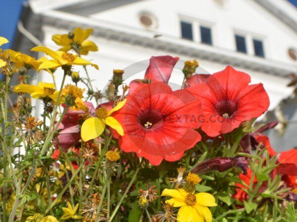Blumen, Pflanzen, Natur