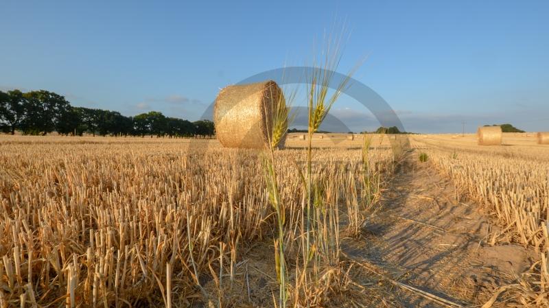 Getreide - Strohballen - Felder